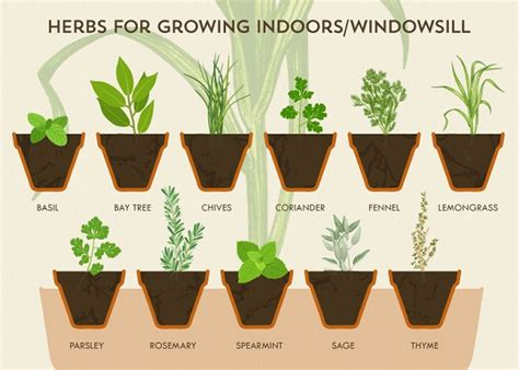 growing herbs in the garden valley news infographic a cheat sheet for growing your own herbs at