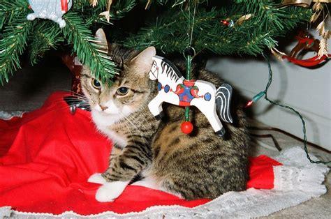 mejor arbol de navidad c 243 mo escoger el mejor 225 rbol de navidad