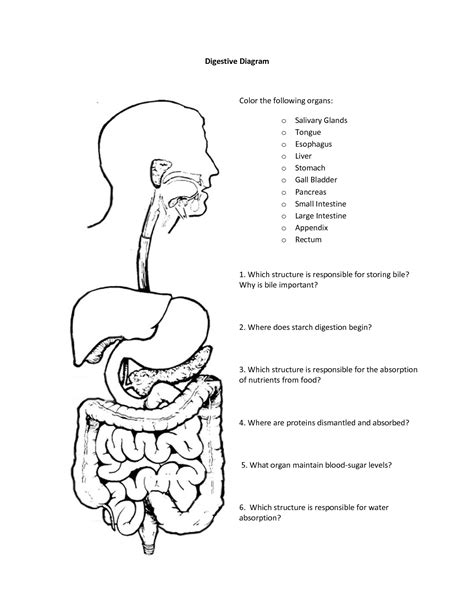 Digestive System Coloring Page Key | digestive system coloring page coloring home