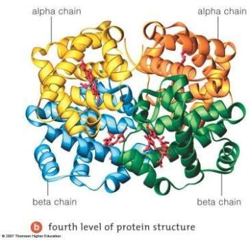 protein quaternary structure 04 171 march 171 2014 171 the catalyst