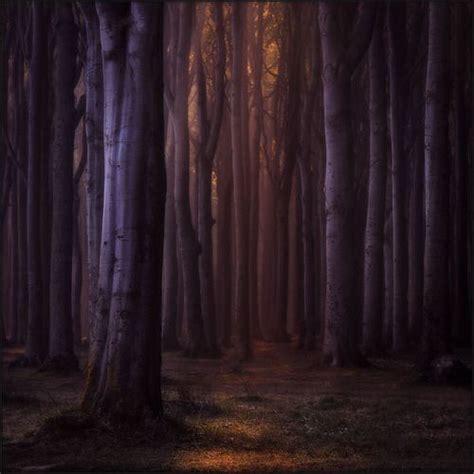 nienhagen wood alemanha nienhagen germany haunted wood foto bugil bokep 2017