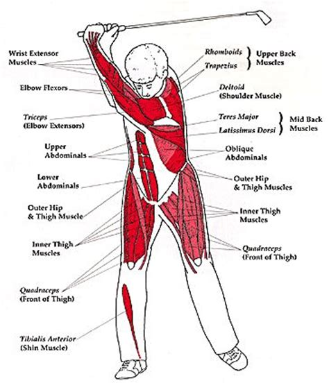 exercise for golf swing 11 best golf fitness images on pinterest