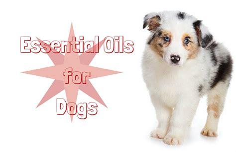 essential oils for dogs essential oils for dogs renaissance