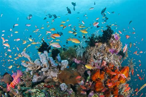 labuan bajo     attractive diving spots south