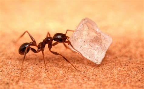how to get rid of ants in bedroom how to get rid of sugar ants in the bedroom
