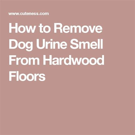 urine smell in hardwood floor 17 best ideas about urine on pet stain