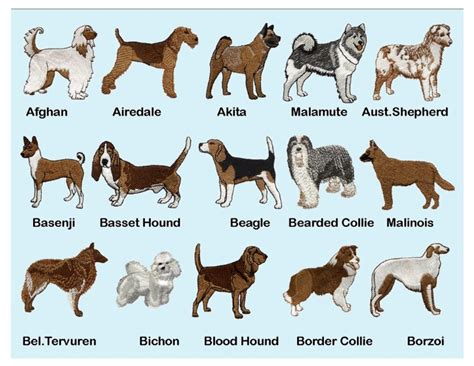 akc puppies akc breed guide breeds picture