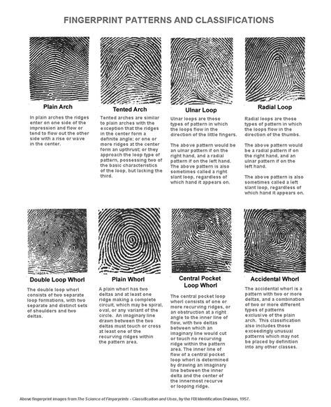 pattern classification meaning kirsty s blog different types of fingerprints