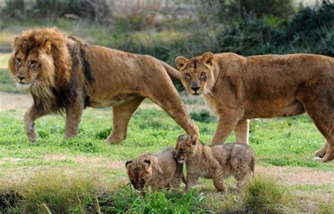 machos adultos pueden llegar hasta los 7 metros de largo y poseer mas el mundo de cida la criatura mas maravillosa del mundo