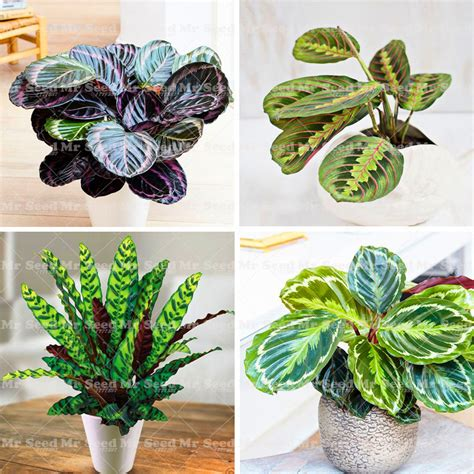popular small desk plants buy cheap small desk plants lots