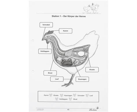 Beschriftung Huhn by Lernwerkstatt Das Huhn Betzold De