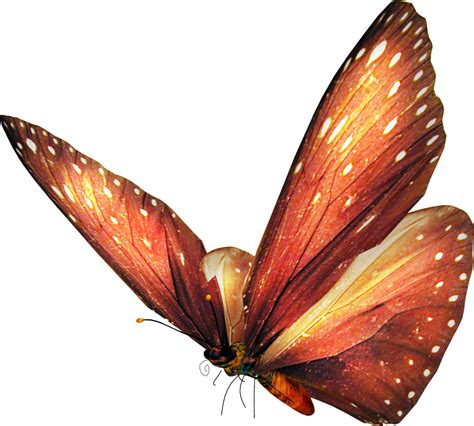 imagenes png mariposas marcos para fotos marcosscrap mariposas png