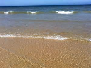 Best Beaches Cape Cod - coast guard beach hopper real estate