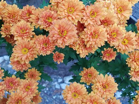 wallpaper bunga gugur gambar wallpaper bunga bunga kecil gudang wallpaper