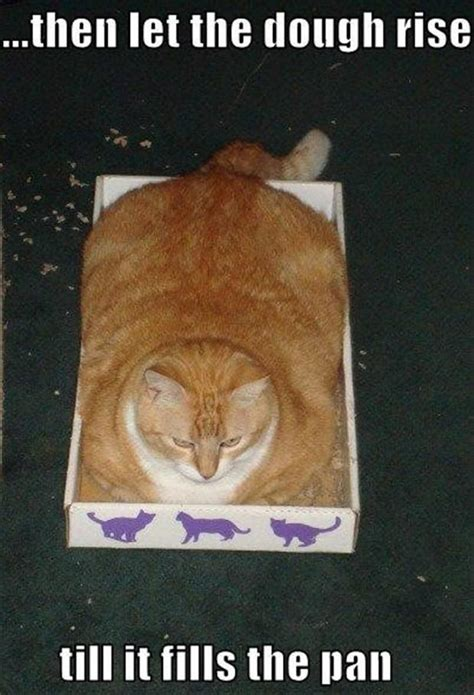 Cat In Bread Meme - funny cooking instructions dump a day