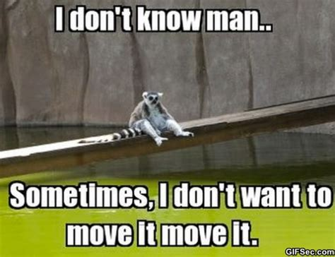 Funny Moving Memes - i like to move it move it