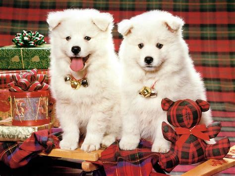 images of christmas animals christmas pups christmas animals