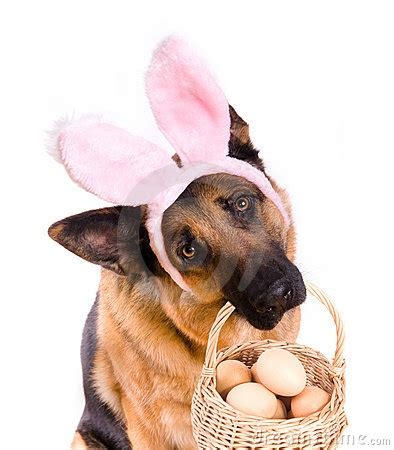 dogs and eggs 17 best images about easter pets on chihuahuas easter peeps and a bunny
