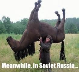 Meme Horse - horse memes memes