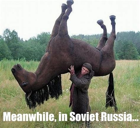 horse memes memes
