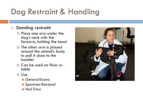 can puppies be around other dogs proper animal handling restraint ppt