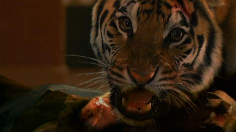 film lion vs tiger the horror hothouse zoo top 10 killer animal movies the