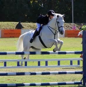 children s jumper championship horse lover s math
