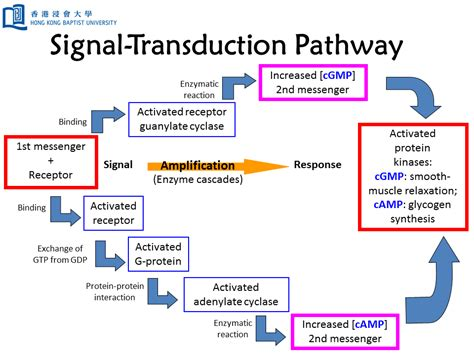 g protein signal transduction signaling transduction tutorial leaders in