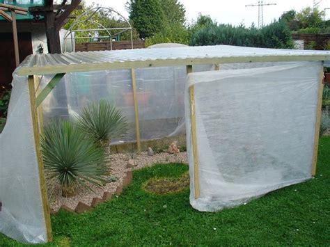 garten yucca braune flecken yucca rostrata trocken 252 berwintert trotzdem blattflecken