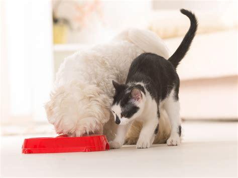 alimentazione animali domestici animali da compagnia le linee guida fediaf per l