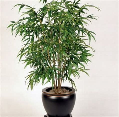 Cheap Indoor Plants | best air purifying indoor plants the bamboo palm is a