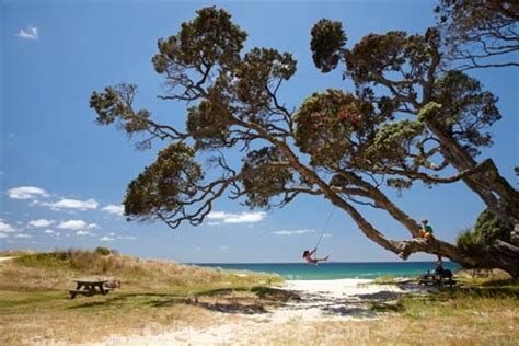 tree swings australia young girl on rope swing under pohutukawa tree whangapoua