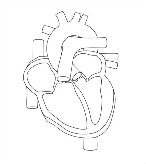 heart diagram templates sample  format   premium templates