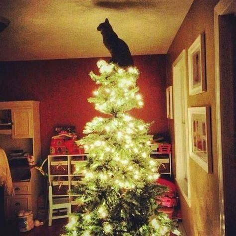 cat on top of christmas tree meme sapin petit chat photos de chats