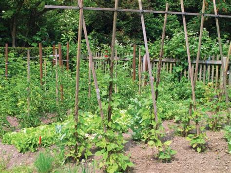 Green Bean Trellis Height plant legumes to help add nitrogen to your garden soil farm and garden grit magazine