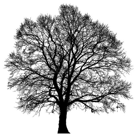 design elements lone tree silhouette of a lone tree stock illustration illustration