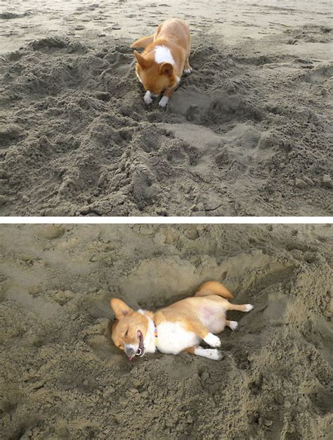 digging bed digging his bed in the sand that is priceless