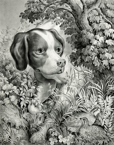imagenes vintage animales ilustraci 243 n gratis vintage antiguos arte perro