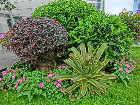 plants gardens file hk central ifc podium garden green plants may 2013