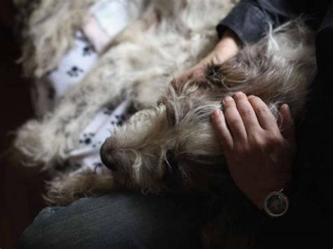 how to euthanize a at home with medication what are some types of medications for pet euthanasia mccnsulting web fc2