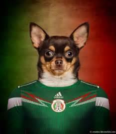 chiens coupe du monde 2014 chihuahua tuxboard