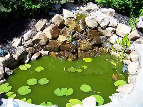 ph levels affect pond water color backyard blessings