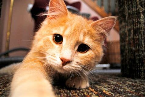 imagenes fotos fotos tiernas de gatos