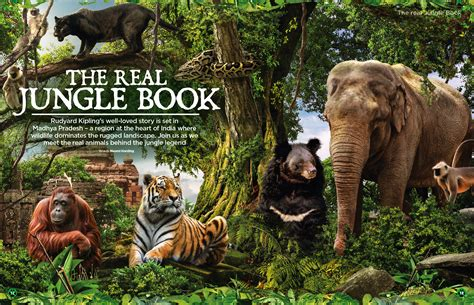 Find In Book Find Out What The Jungle Book Animals Are Really Like In Issue 32 Animalanswers Co