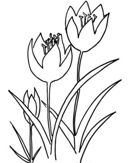 warna gambar bunga tulip kartun