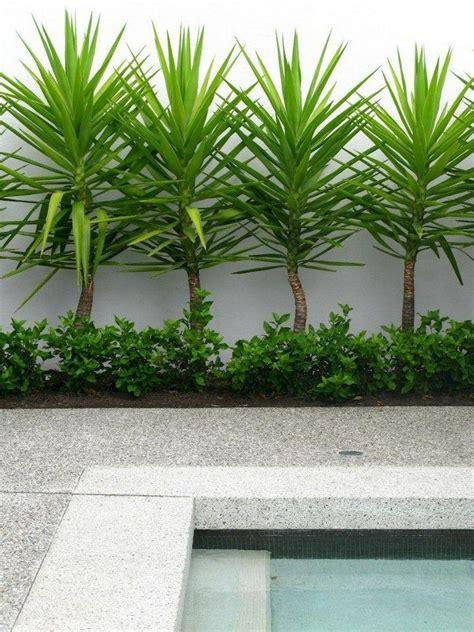 brilliant  maintenance front yard landscaping ideas
