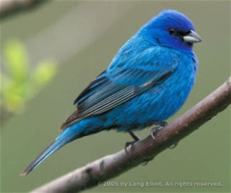 what color cancels out blue viewpoint mountain bluebird