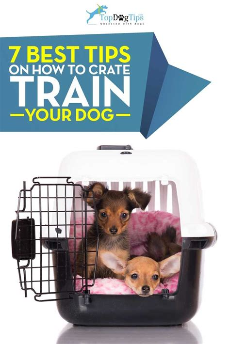 crate training tips for crate training your dog most professionals in