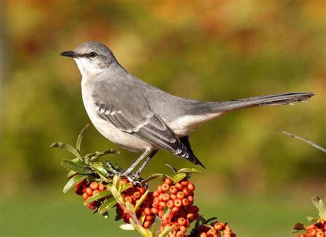 best 28 types of birds in california half of