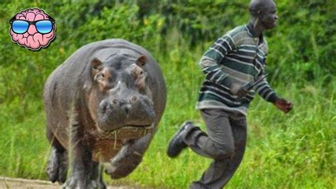 Top 10 Most Dangerous Animals by Top 10 Most Dangerous Animals In Africa Top 10 Archive